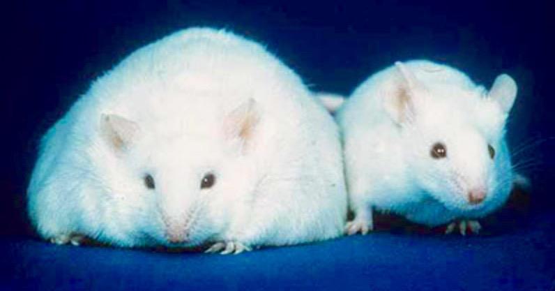 2 Mäuse